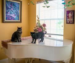 poezen op piano rechtenvrij