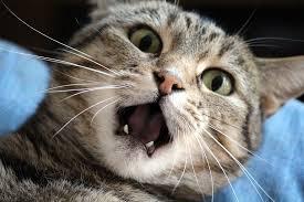 stress-kat-rechtenvrij