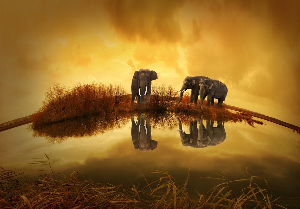 olifanten-rechtenvrij
